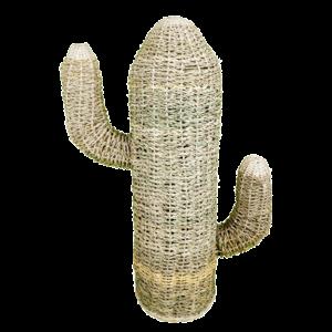 C129-2-cactus-cuerda-grande